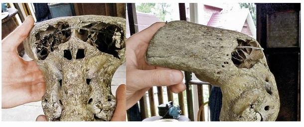 crânios-anômalos-encontrados-na-Rússia.jpg